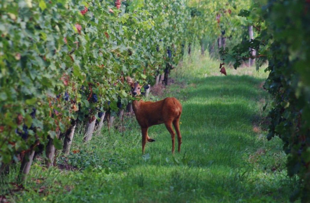 la vigne au naturel